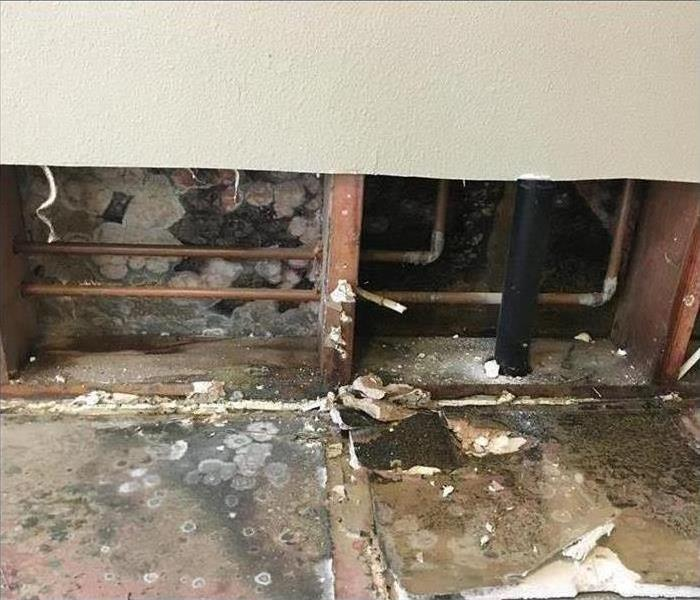 Torn out wall and cabinet showing mold growth and the cavity plumbing